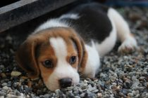 Never Skip These Steps While Caring Your Pet