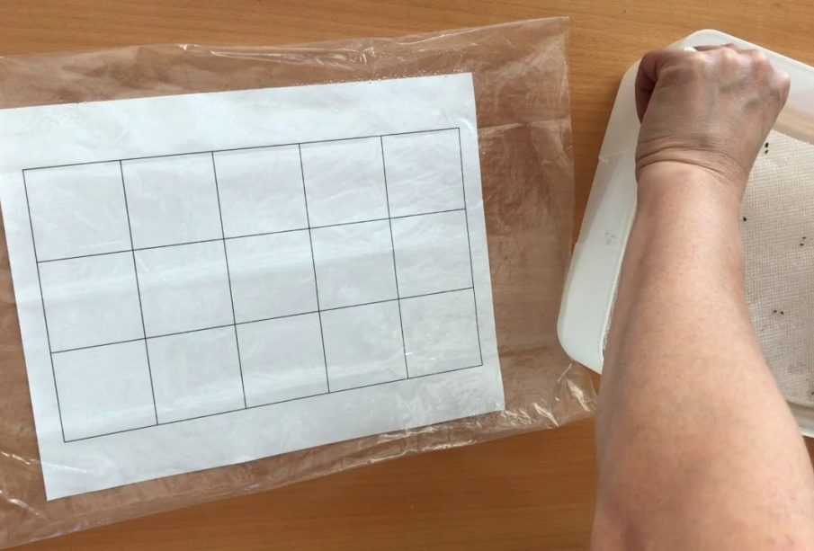 Do You Want To Make A Plantable Seed Paper?