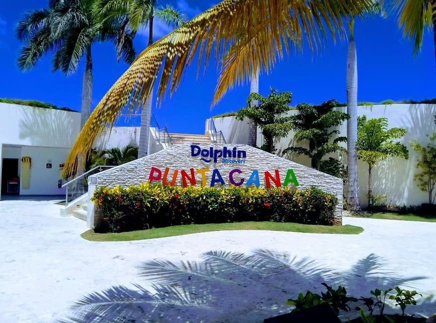 Swim with dolphins in Punta Cana